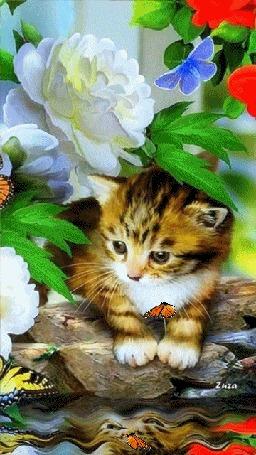 Анимация Серый котенок на берегу водоема на фоне цветов и бабочек, by Zuza