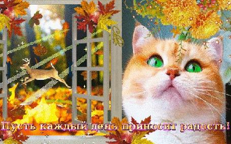 Анимация Осень, окно распахнутое, листопад, скачет олень в лучах солнца, кошечка зеленоглазая моргает глазками (Пусть каждый день приносит радость!)