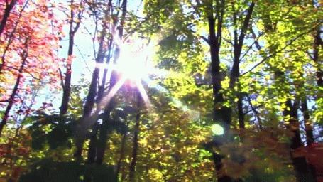 Анимация Солнце освещает лес