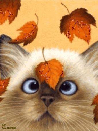 Анимация Котенок с осенним листочком, автор Елена