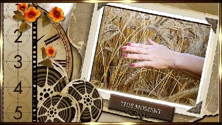 Анимация На фоне проектора и старой пленки рука гладит пшеничные колосья. (THIS MOMENT)