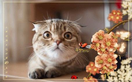 Анимация Кот внимательно смотрит на пролетающую божью коровку, анимация Юлия