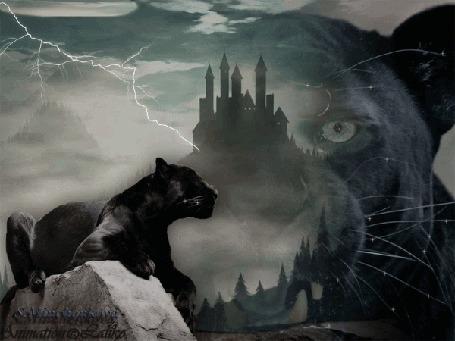 Анимация Черная пантера на фоне хмурого неба, затянутого тучами, сверкающих молний и старого замка