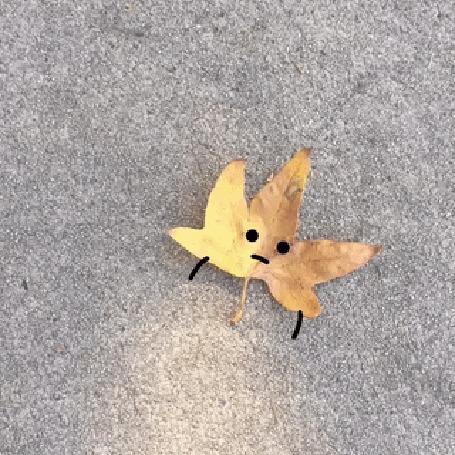 Анимация Осенние листья знакомятся на асфальте