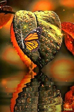 Анимация Бабочка парит над листочком в каплях воды, автор Melek