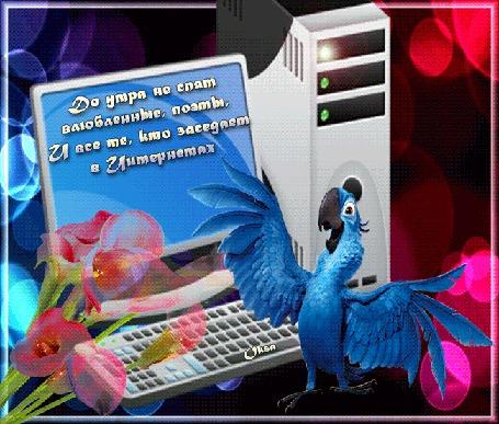Анимация Голубой попугай на фоне компьютера и розовых калл (До утра не спят влюбленные, поэты и все те, кто заседает в интернетах) by Oksa