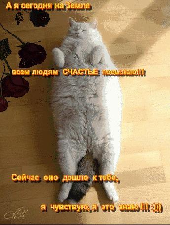 Анимация Кот лежит на спине, лапки сложил на груди, цветы вокруг (А я сегодня на Земле всем людям СЧАСТЬЕ посылаю! Сейчас оно дошло к тебе, я чувствую, я это знаю!:))))