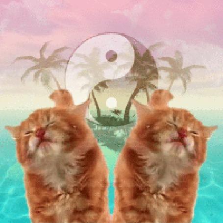 Анимация Два рыжих котенка на фоне лазурного океана, пальм на тропическом острове и знака инь-ян