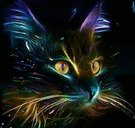 Анимация Нарисованный кот на черном фоне
