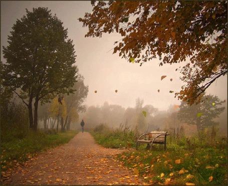 Анимация Аллея в парке, усыпанная желтыми листьями