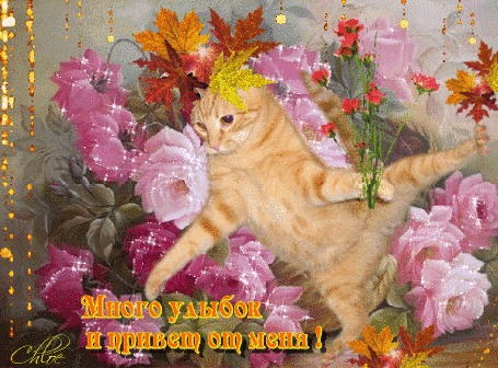 Анимация Озорной рыжий кот в одной лапке держит букет цветов, в другой лапке держит букет листьев, на голове блестящий осенний букет, задний фон нежных цветов (Много улыбок и привет от меня!)
