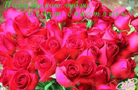 Анимация Букет роз мягко переливаются матовым блеском (Пусть все, кого люблю, будут счастливы!)