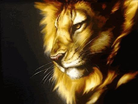Анимация Лев в профиль на темном фоне