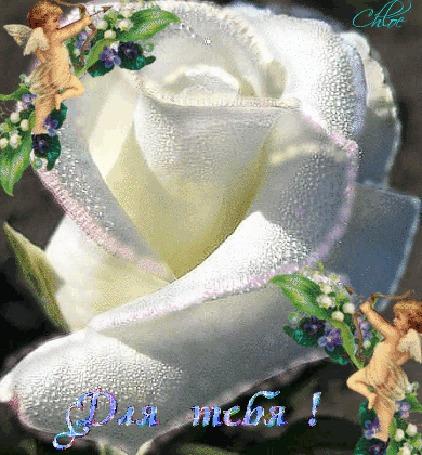 Анимация Белая королевская роза в каплях росы, по бокам ангелочки, надпись (Для тебя!)