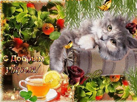 Анимация Серий котик лежит на подушке на фоне бабочек, роз и чая с лимоном (С добрым утром!)