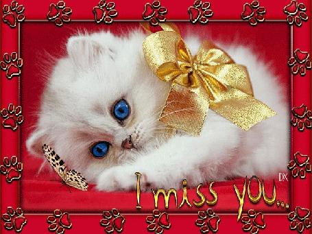 Анимация Голубоглазый белый котенок с бантом на шее смотрит на бабочку (I miss you / Я скучаю по тебе)