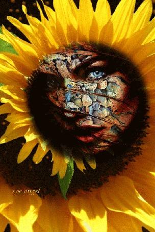 Анимация Вращающийся цветок подсолнуха с лицом девушки в середине, by zoe angel