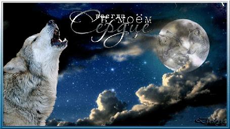 Анимация Одинокая волчица воет на луну (Всегда в моем сердце)