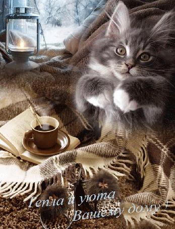 Анимация Котенок лежит на подушке под пледом, рядом чашка горячего кофе и тапочки. На подоконнике лампа и снег за окном (Тепла и уюта Вашему дому!) автор Ирис