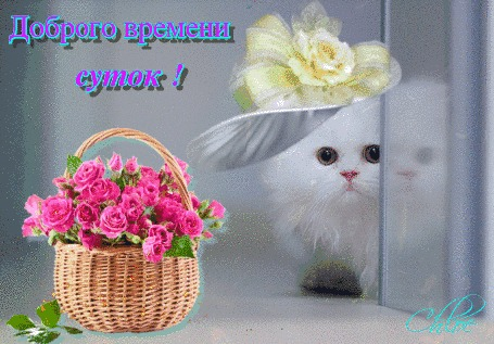Анимация Бесподобный котенок в шляпке выглядывает мило из-за угла, корзина цветов на переднем плане, (Доброго времени суток!)