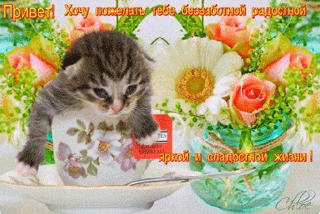 Анимация Маленький котик в чашке среди переливающихся цветов (Привет! Хочу пожелать тебе беззаботной радостной яркой и сладостной жизни!)