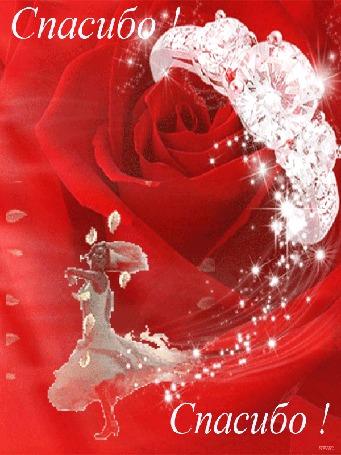 Анимация Большая распускающаяся роза с кольцом на фоне которой танцует девушка, разбрасывая лепестки роз (Спасибо! ), автор Ирис