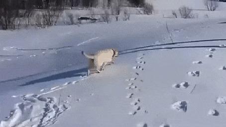Анимация Пес катается на снегу, скатываясь с горки