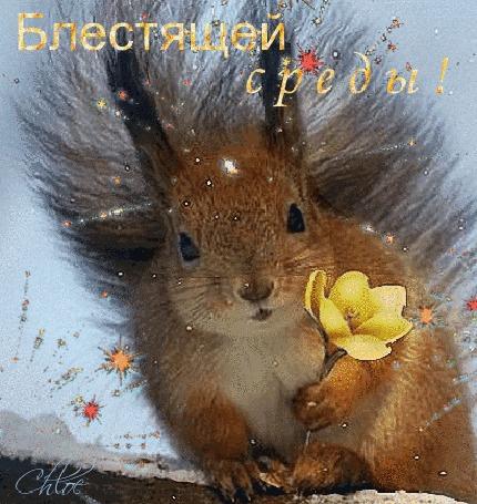 Анимация Красивая белка держит в лапке нежный цветочек (Блестящей среды!)