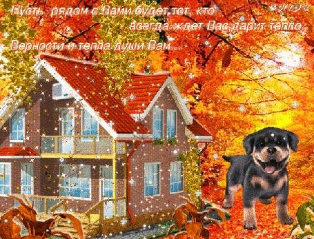 Анимация Осенне-зимний пейзаж, красочный лес, собачка, дом, тихо падает снег (Пусть рядом с Вами будет тот, кто всегда ждет Вас, дарит тепло. Верности и тепла души Вам.), автор Chloe
