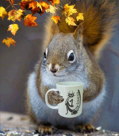Анимация Белка с горячей чашкой чая на фоне падающих осенних листьев