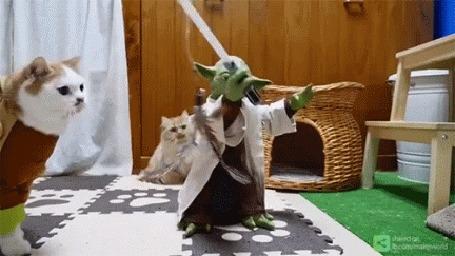 Анимация Мастер Yoda / Йода из фантастической киносаги Звездные войны обучает кошек - джидаев (Мощнее вы станете, если поймать перо вы можете)