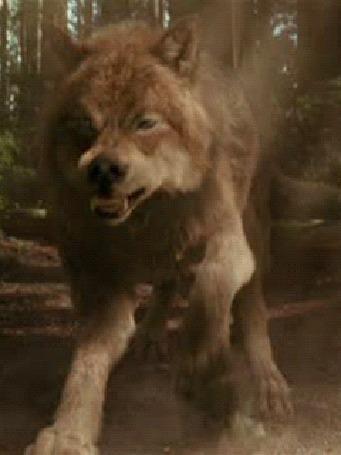 Анимация Освирепевший волк нападает на обидчика