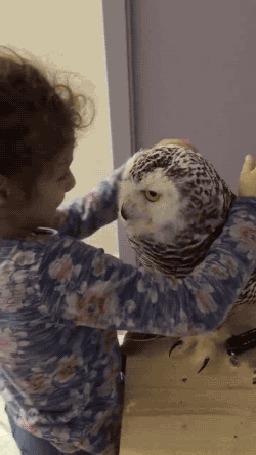 Анимация Девочка ласково обнимает сову, а та нежно к ней прижимается, пощипывая клювом за волосы