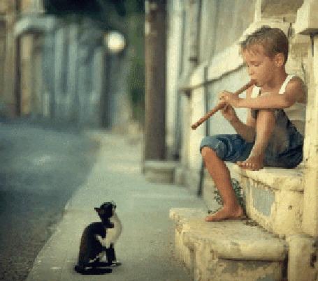 Анимация Мальчик на флейте играет перед котенком