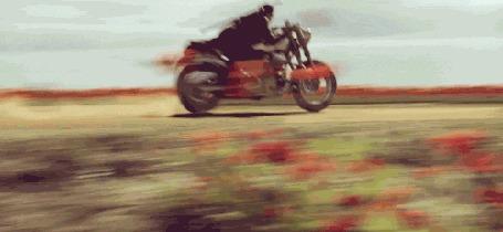 Анимация Байкер на байке едет по пыльной дороге, по маковому полю