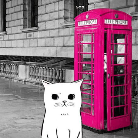 Анимация Белый котик сидит на улице Лондона под дождем
