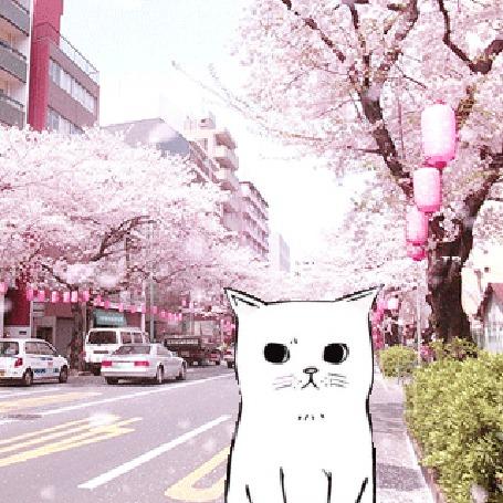 Анимация Белый котик под падающими лепестками сакуры на улице Японии