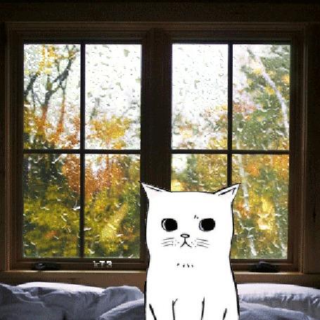 Анимация Белый котик сидит на кровати у окна, за которым идет дождь и падают осенние листья
