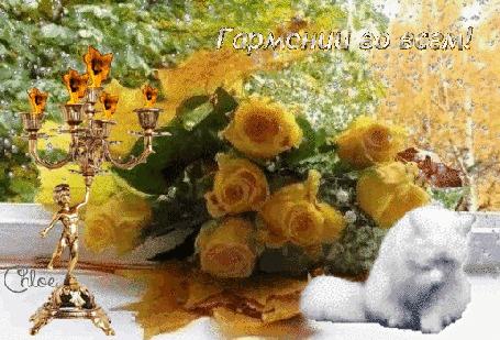 Анимация Осенний букет на подоконнике, идет снег за окном, горят свечи в канделябре, кошечка умывается, (Гармонии во всем!), автор Chloe