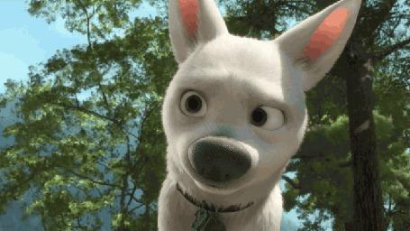Анимация Пес Bolt / Вольт и его сменяющиеся эмоции, мультфильм Bolt / Вольт студии Disney / Дисней