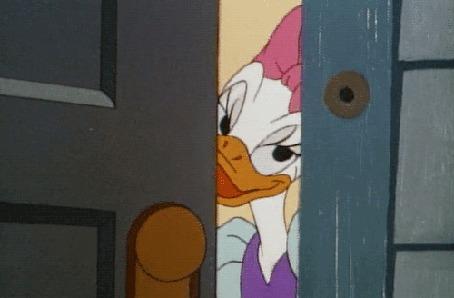 Анимация Daisy Duck / Дейзи Дак, герой мультфильма студии Walt Disney / Волта Диснея