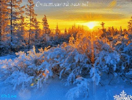 Анимация Красивый зимний лес на закате играет светом и тенями, (Счастливой зимы!)