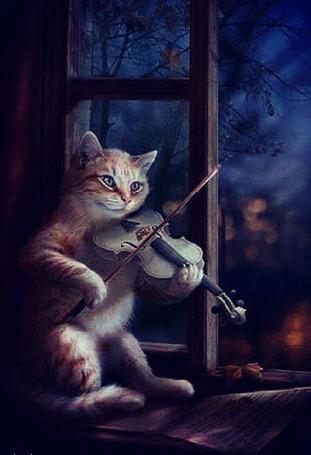 Анимация Кот, сидя на подоконнике, играет на скрипке