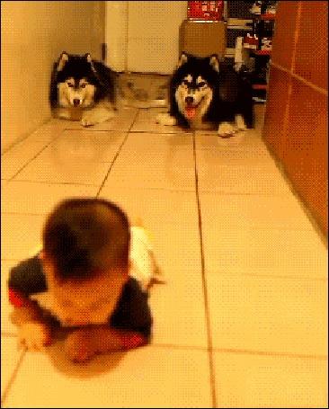 Happy dog gif
