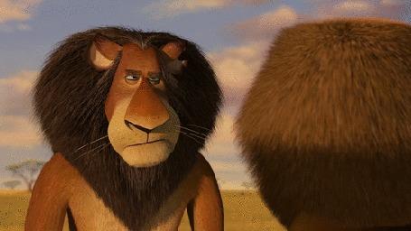 Анимация Отец льва Alex / Алекса учится артистизму у сына, Madagascar: Escape 2 Africa / Мадагаскар 2: побег в Африку