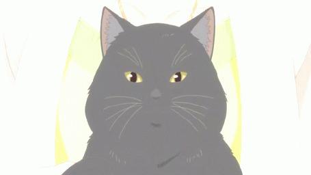 Анимация Кот из аниме Kanojo to Kanojo no Neko / Она и ее кот
