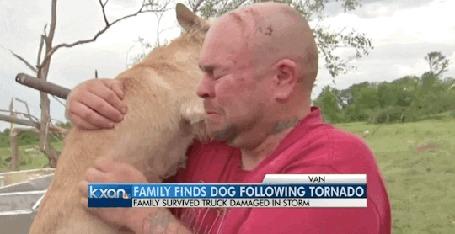 Анимация Мужчина встретился со своей собакой после торнадо