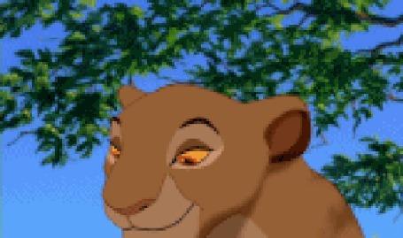 Анимация Симба из мультфильма Король Лев