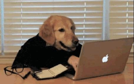 Анимация Собака сидит за столом перед ноутбуком и, быстро печатает на клавиатуре, рядом лежат очки, записная книжка