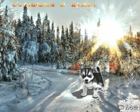 Анимация Очень яркий солнечный зимний день, собачка вне себя от радости, (Солнышка в душе!)